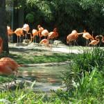 Grădina Botanică, Gradina Zoologică și parcurile din București