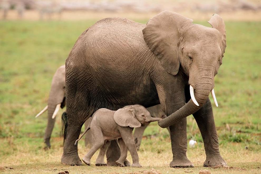 4-elefant