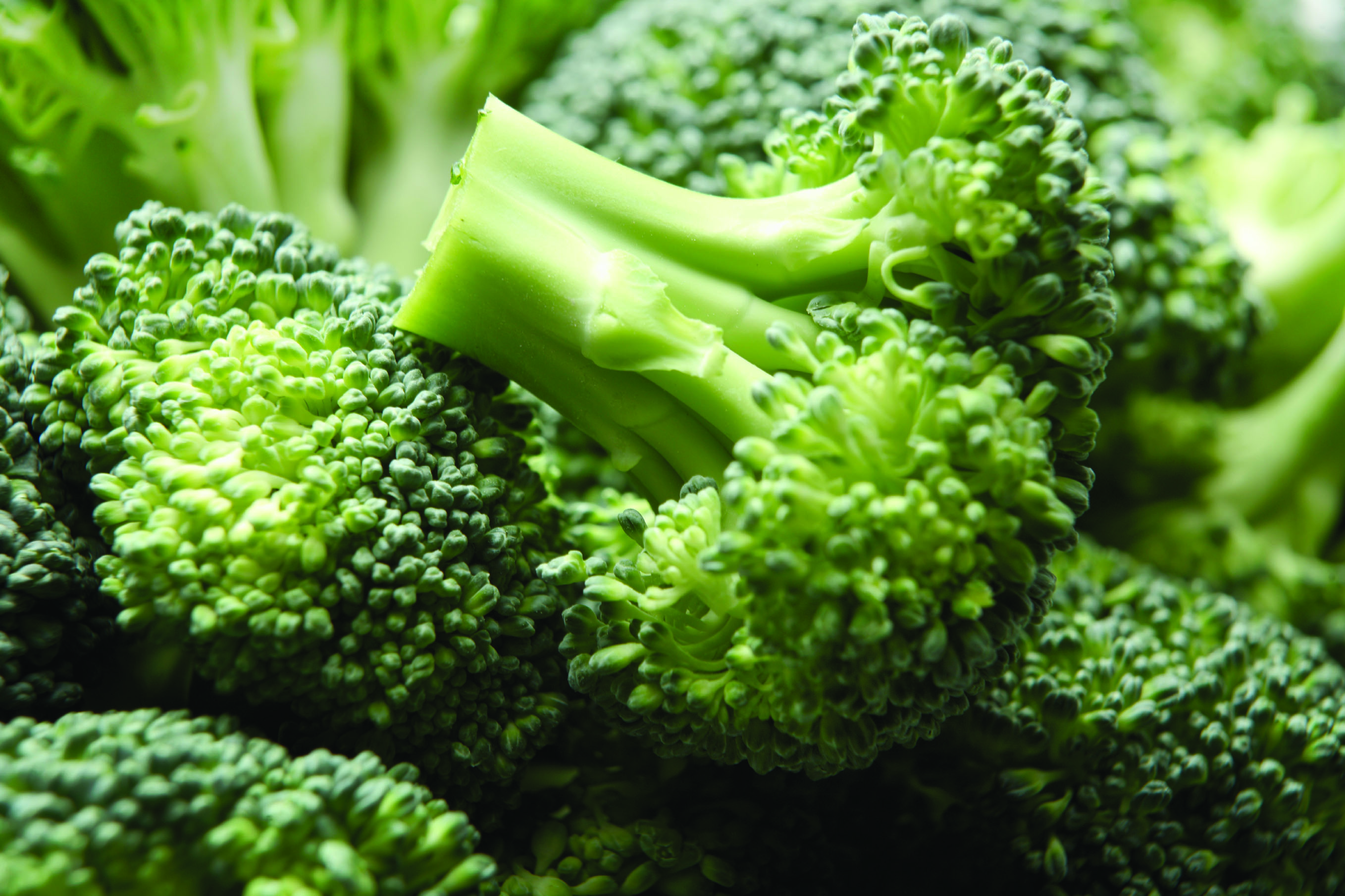 Brocoli_large