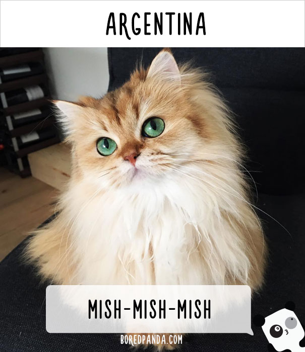 cat-calling-in-different-languages-argentina-57a72ec61e70f__605