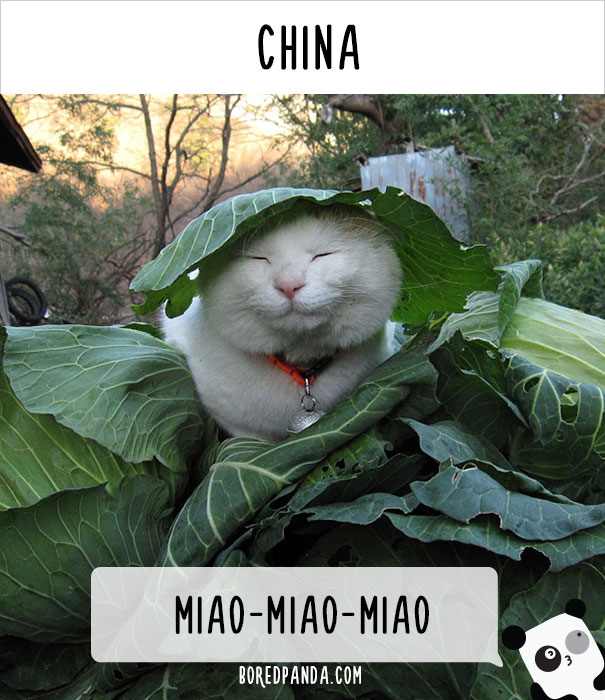 how-people-call-cats-in-china