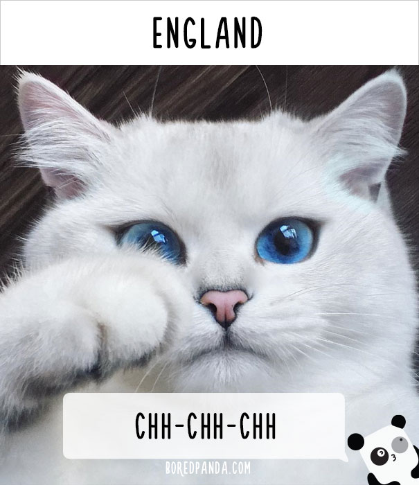 how-people-call-cats-in-england
