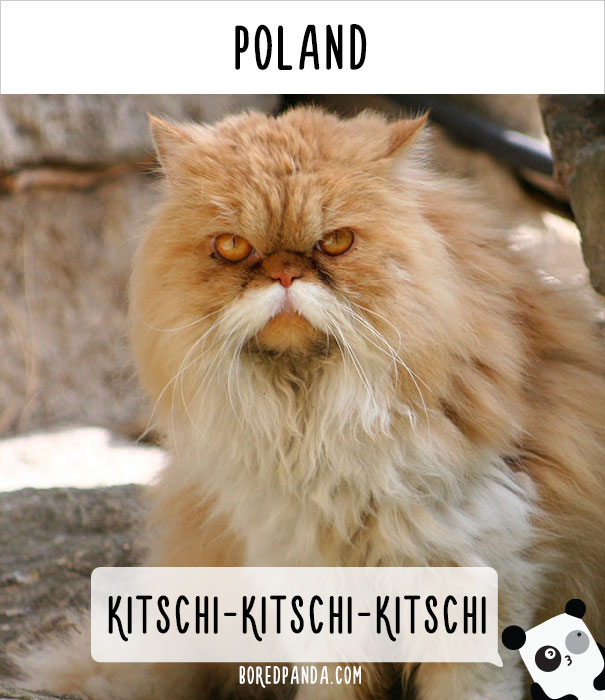 how-people-call-cats-in-poland-1