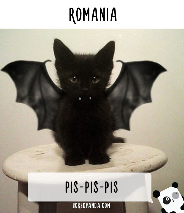 how-people-call-cats-in-romania-1