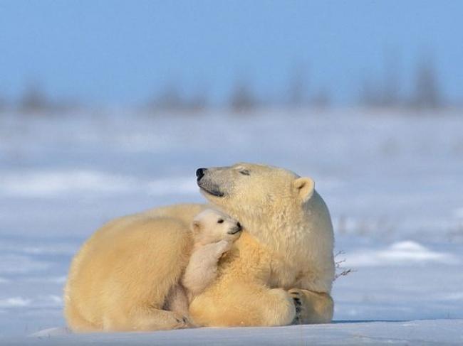 10-urs-polar