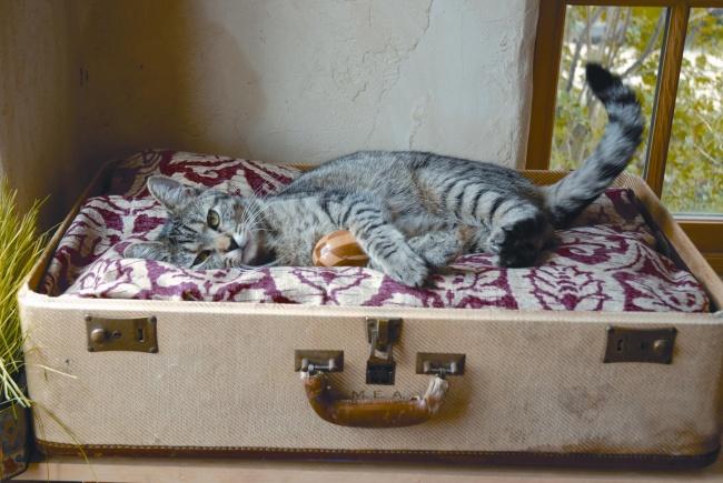 13-pat-pisica