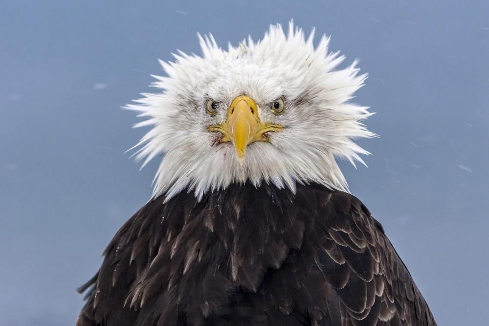 8-vultur